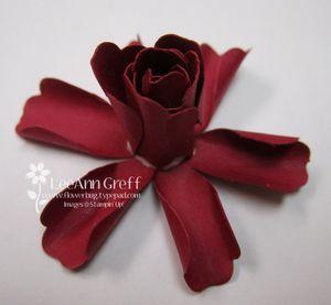 Blossom rose 6