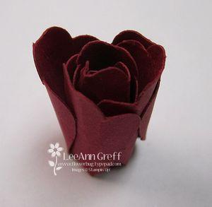 Blossom rose 4