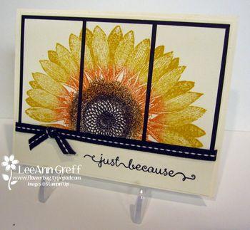 Sept Club sunflower