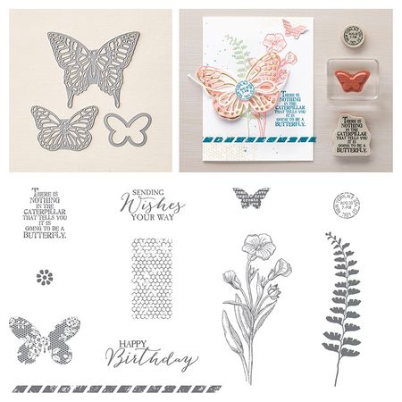 Butterfly basics bundle.