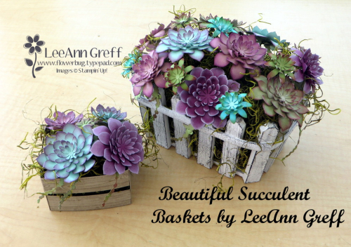 Succulent baskets