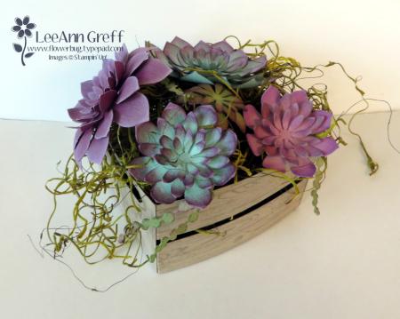 Succulents crate