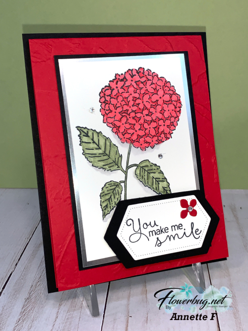 Feb Annette Hydrangea