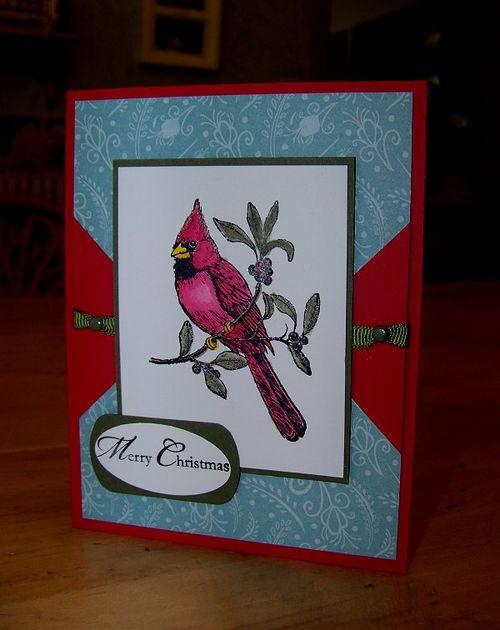 Baja Cardinal